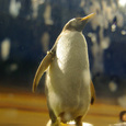 010-ペンギン餌付け前