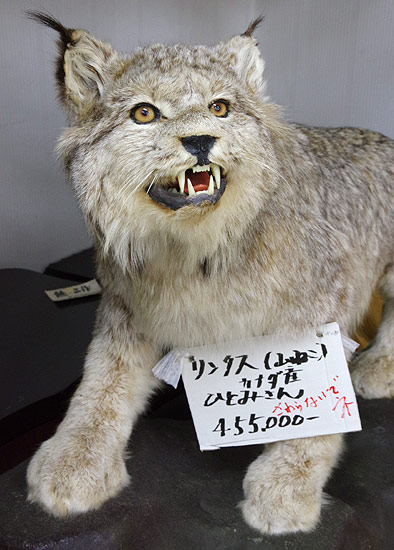 S660 北海道ツーリング 2019 日勝峠 熊の剥製 42万円